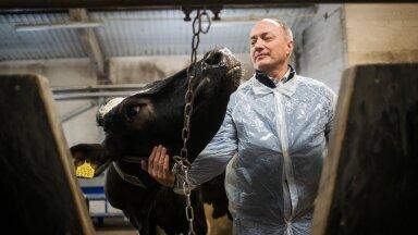 Toomas Tiirats maaülikoolist loodab, et seda COVIDi antikehasid lüpsnud lehma ei pea tapamajja saatma ja ta saab elada pika ilusa elu.