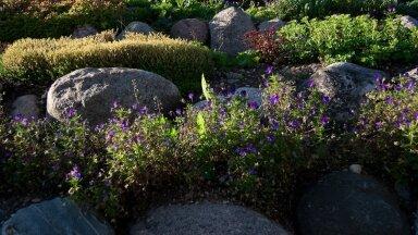 Kiviktaimla rajamine — milliseid taimi sinna valida ja kuidas istutada?