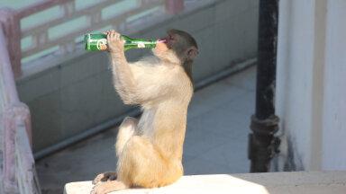 """Ученые выяснили, какие животные """"пьяницы"""", а какие """"трезвенники"""""""
