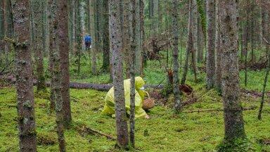 Seenelised metsas. Pilt on antud loole illustreeriv.