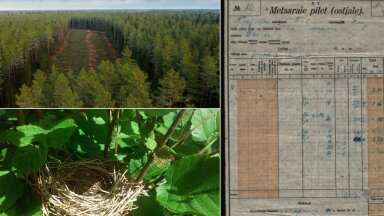 Jutt ajaloolisest kevadisest linnurahust tuleb metsameestele täieliku üllatusena. Kuidas tegelikult olnud on?