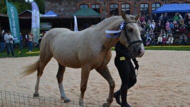 Tori tõugu hobuste tutvustamine