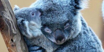 Emaarmastus: 20 imearmsat loomabeebit, kes teavad, et nad saavad alati ema toele ja siirusele loota