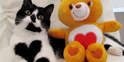 Sõbrapäeva GALERII: Suursugune kass, kes kannab uhet südant väärikalt oma rinnal