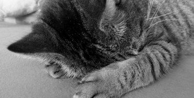 Humoorikas VIDEO: Tiimitöö! Vahva viis, kuidas koos kassiga hommikul ajalehte lugeda