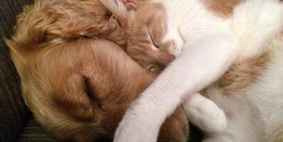 Muhedad FOTOD: 23 jultunud kassi, kes koeri padjana kasutavad