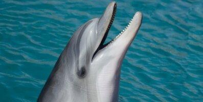 Teadlased andsid delfiinidele LSD-d, lootes nii nendega suhtlema õppida