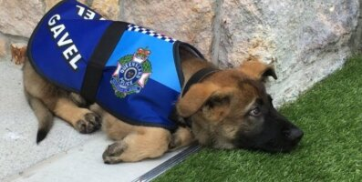 Politseikoolist väljalangenud liiga armas ja südamlik koer saab uue, ebatavalise ja peaaegu kuningliku ameti