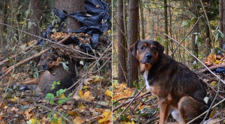 Драма в Вильнюсе: хозяин уехал, собака осталась сторожить ...