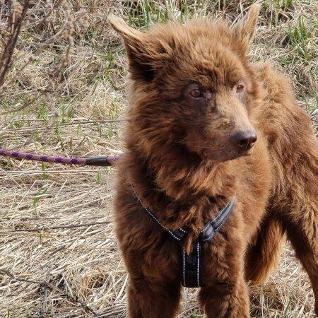 Setumaalt päästetud koer