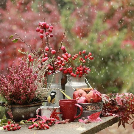Häid nõuandeid, kuidas aed talve tulekuks ette valmistada