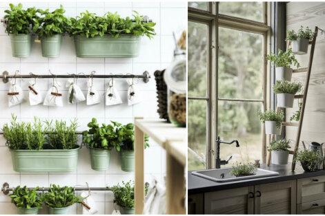 Seitse suvist ürti, mida tasub aknalaual kasvatada