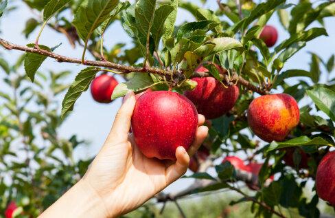 Kas üks õun päevas hoiab arsti eemal?