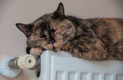 Õhk-vesisoojuspumbast saadav soojus tasub suunata põrandaküttesse, radiaatoreid küttes selle kasutegur väheneb.