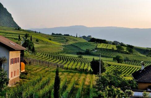 Kui hästi sina veinimaailmas orienteerud? Need on Euroopa kuulsaimad veiniistandused!