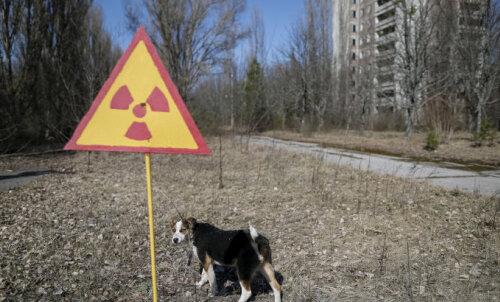 ФОТО | Животные Чернобыля. Как им живется в зоне отчуждения в наши дни