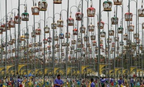 ФОТО | Спой, птичка: удивительный конкурс певчих птиц в Таиланде, или Кто такой бюльбюль?