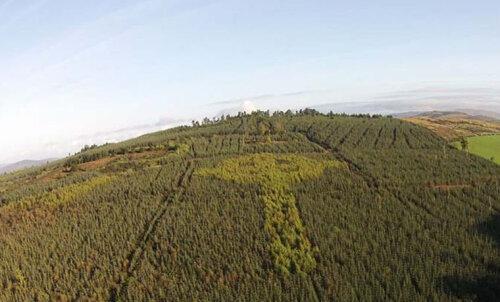 В Ирландии обнаружен огромный кельтский крест из деревьев