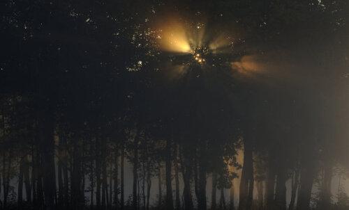Сбежал бы даже Кощей: шесть самых мрачных и мистических лесов в мире