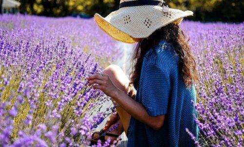 ФОТО | Где в Эстонии и Латвии полюбоваться прекрасными лавандовыми полями