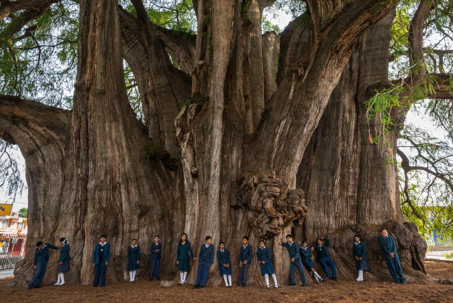 По древнегречески слово деревья