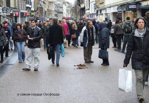 Пора валить? Засранная собаками Европа - чему завидуют россияне?
