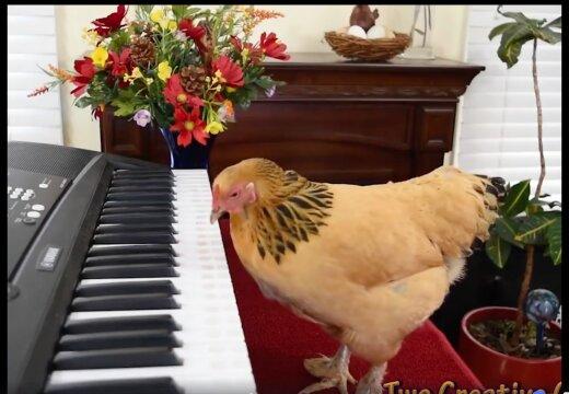 VIDEO | Kana esitab klaveril Puccini aaria. Päriselt.