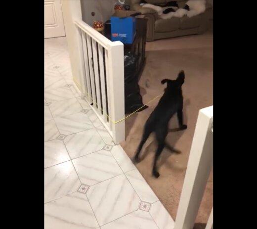 VIDEO | Kuidas koera tunde rakkes hoida?