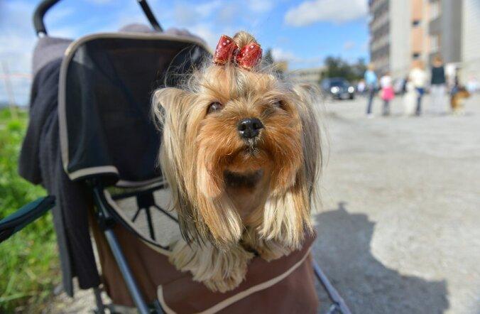 ФОТО: В Таллинне прошла благотворительная выставка собак, где оценивали характер, а не породистость