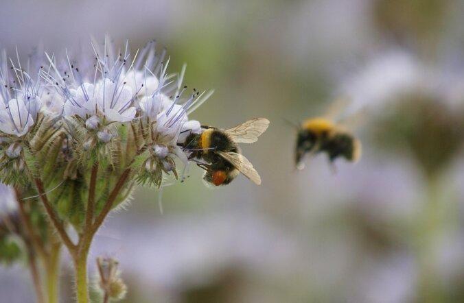 Ärevus, pessimism, hirm – putukad on sama tundeküllased kui inimesed!