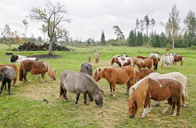 Viljandimaa ponid teevad ära raskeimad talutööd