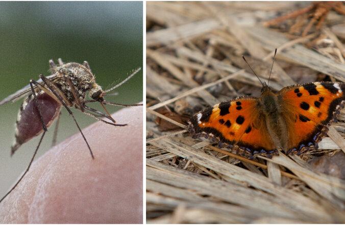 Sääsed, liblikad ja teised: milline võiks tulla 2017. aasta Eesti putukasuvi?