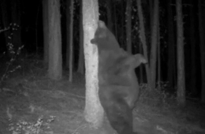 ARMAS VIDEO: Mustkaru näitab parimat viisi selja sügamiseks