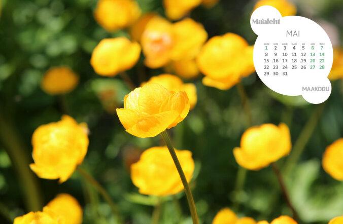 Lae taustapildiks kaunis Maaleht.ee kalender