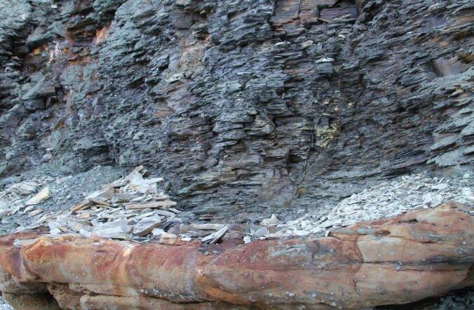 Eesti mudakivi ehk graptoliitargilliit – kas oht või kasulik maavara?