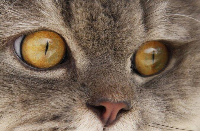 Домашние животные: в чем опасность для человека?