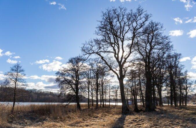 Kevadine Viljandi