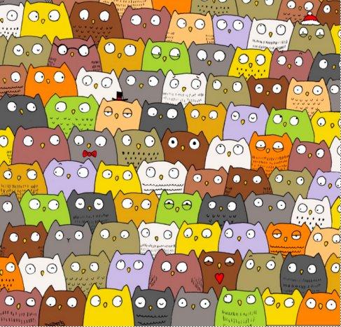 PILTMÕISTATUS | Ajab silmi hõõruma! Kas leiad öökullide seast kassi?