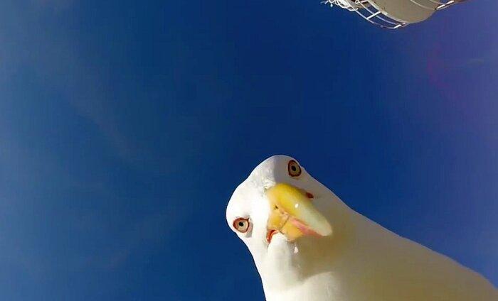 VIDEO: ka kajakad tahavad selfie´t teha
