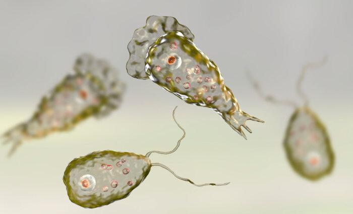 TOP 20 | Tõeliselt tülgastav vaatamine: need on kõige eluohtlikumad parasiidid, mis sind reisil varitseda võivad