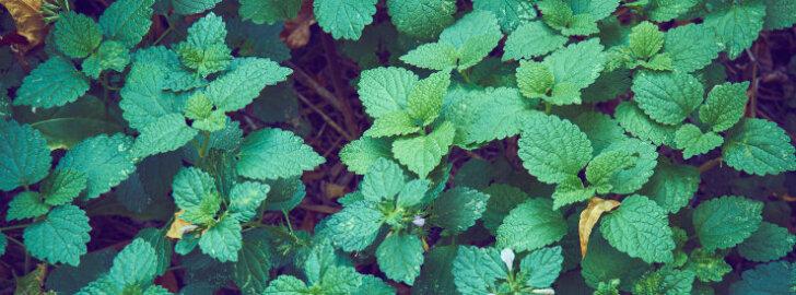 Talvekate - taimede õnn või hukatus