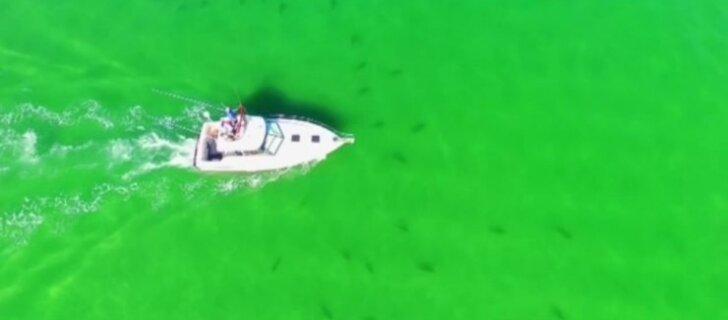 DROONIVIDEO: Ettevaatust, haid! Vaata ülevalt, kuidas meri Florida ranniku lähedal haidest kubiseb