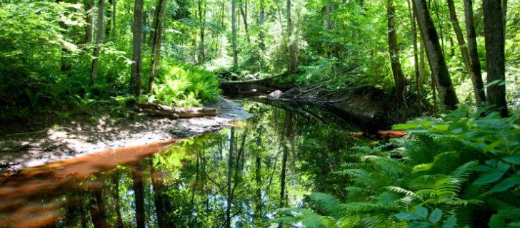 EESTI 100 AARET | Eestimaa Siber ja looduslik pärnamets