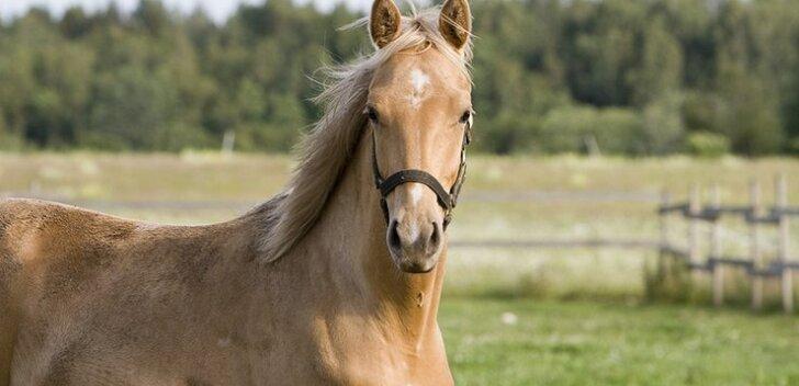 Staažikas ratsatreener sai süüdistuse laste seksuaalses ahistamises