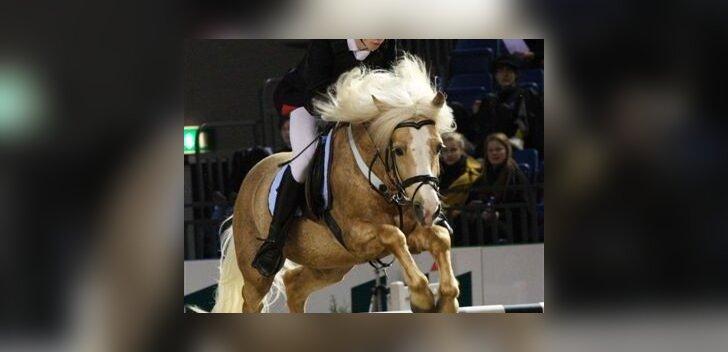 Tunnustatakse parimaid eesti tõugu hobuseid spordis