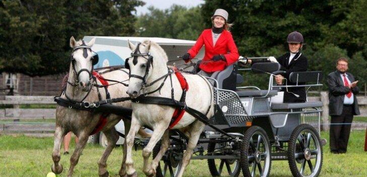Eesti hobune - hea nii rakendis kui ratsa