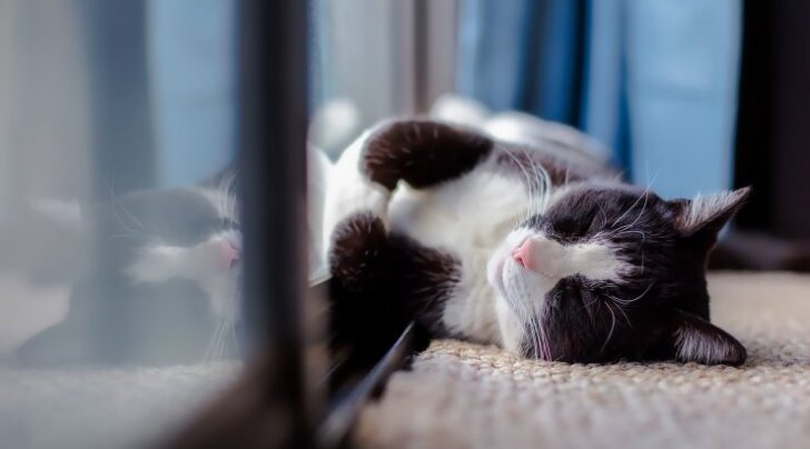 Miks kass nii väga minu otsas magada armastab?