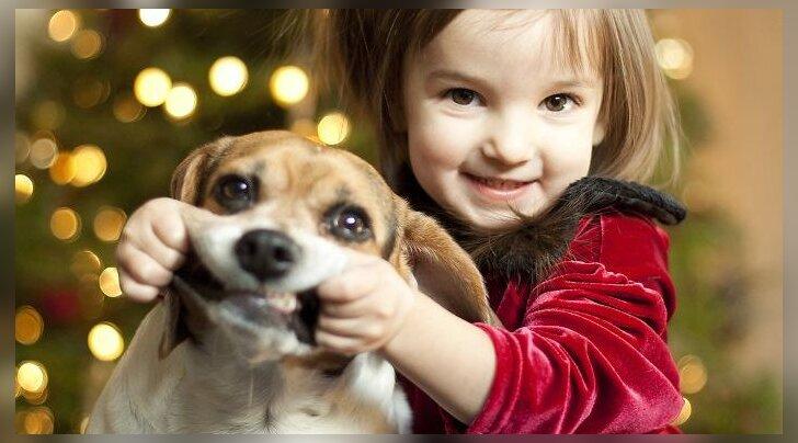 Lustakas GALERII: need lemmikloomad vihkavad kõige rohkem maailmas jõule ja kõike pühadega seonduvat