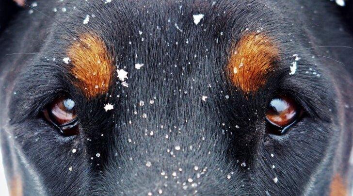 Põnev TEST: Vaata järgi, mis koer sulle sobib! Milline koeratõug sa oma iseloomult oled?