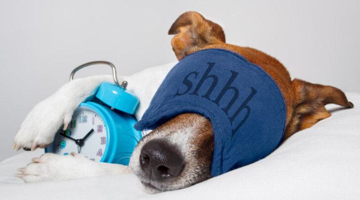 PÕNEV: Tuleb välja, et koerad oskavad ilmselt oma ninaga kellaaega määrata